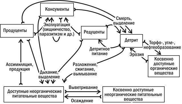 живых организмах и перенос