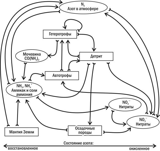 Экология: биология