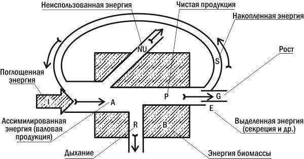 Распределение потоков энергии